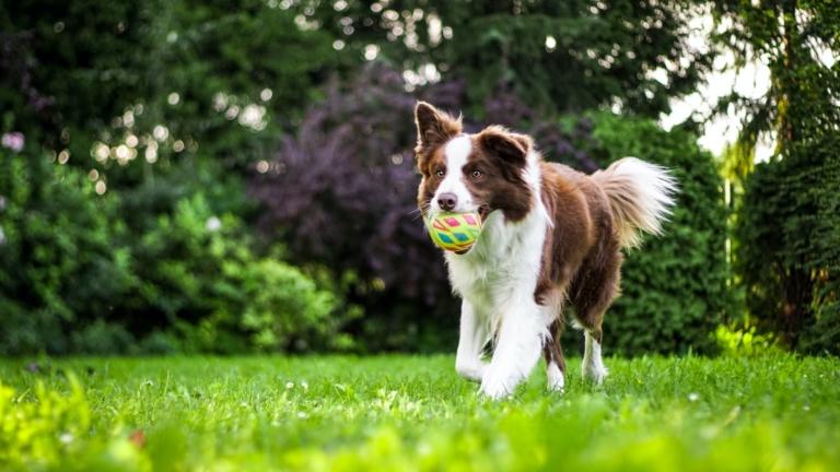 Tipy na sportování se psem